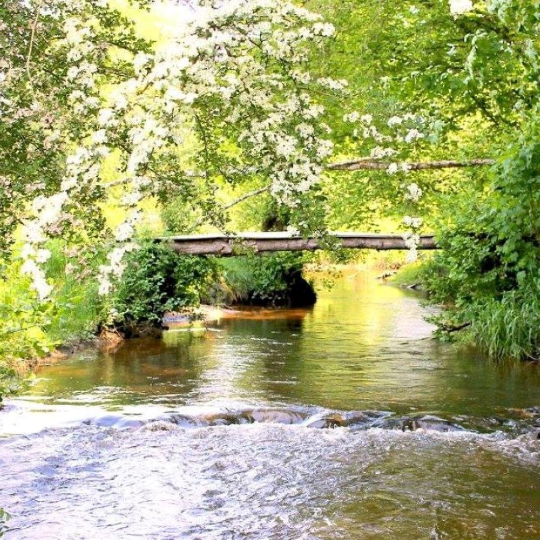 Rivier, dammen bouwen