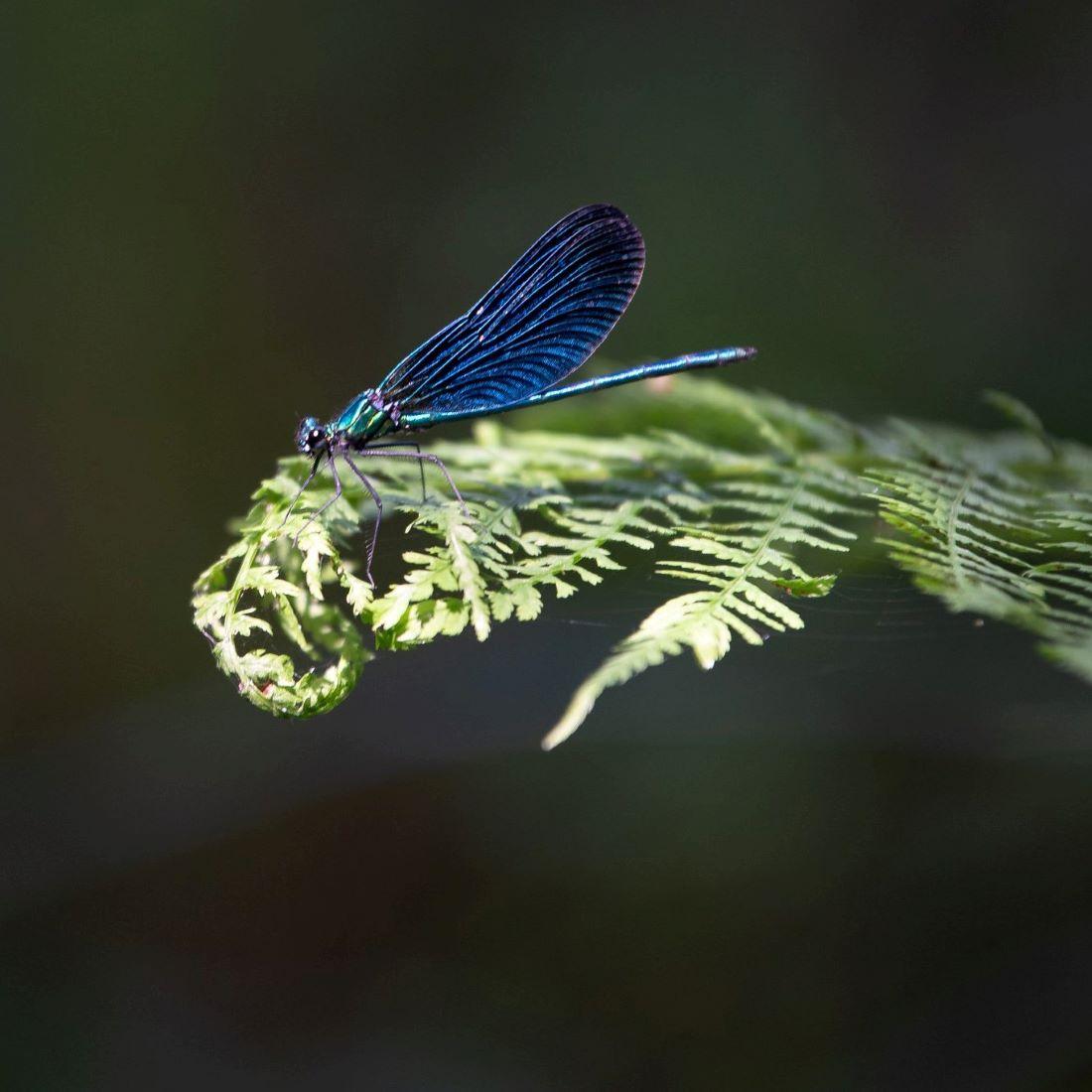 libelle (2)